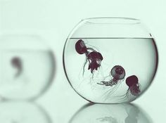 I'd love some jellyfish in a fish bowl! Do they really sell these?