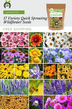 Beautiful Flowers Garden, Pretty Flowers, Wild Flowers, Heather Plant, Small Yard Landscaping, Rainbow Roses, Moon Garden, Wildflower Seeds, Planting Flowers