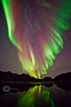 Aurora en Sortland, Noruega.- -- [REPINNED by All Creatures Gift Shop]