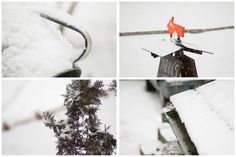 snow and snow