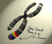 the gay gene