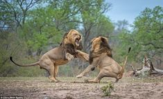 Photographer Corlette Wessells from Johannesburg, was lucky enough to witness and photograph the fight, blow-by-blow
