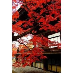 Waterfall in autumn, Japan | Amazing ✈ World | Pinterest