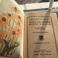 wild flower : a playlist on We Heart It Elf Rogue, Virgin Suicides, Flower Yellow, Under Your Spell, This Is A Book, Art Hoe, Memento Mori, Mellow Yellow, Foto E Video