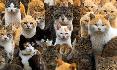 An army of cats rules the remote Aoshima island in southern Japan's Ehime prefecture