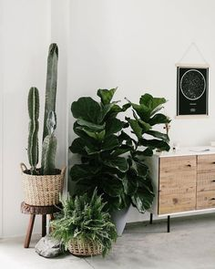 west elm (westelm) on Have you noticed we love plants Swipe through for some plant vibes! House Plants Decor, Plant Decor, West Elm, Indoor Garden, Indoor Plants, Amazing Gardens, Beautiful Gardens, Chlorophytum, Decoration Plante