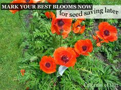 Empress of Dirt Tip: Mark Your Best Blooms Now For Saving Seeds Later