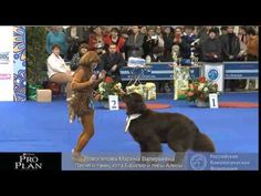 ▶ Awesome training in action- one of our favorite Freestyle Teams! Wonder how long that took to train :)) Newfoundland Dogs, Bow Wow, Shih Tzus, Gentle Giant, Daddys Girl, Pet Stuff, Mans Best Friend, Training Tips, Dog Life