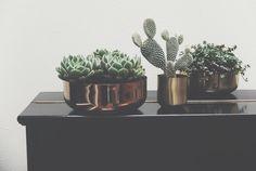 Kremmerhuset-bloggen: Kobber, messing og grønne planter