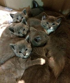 Family Let a Grey Cat in from the Cold, Three Weeks Later, She Brought Them These.. - Love Meow