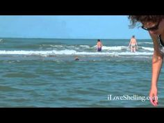 Seashells on a Sanibel Sand Bar   bonnie@magicofmickey.com can help you with plans to enjoy Sanibel ..