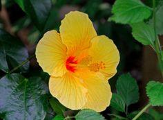 Pretty Hibiscus Flower
