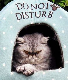 Image result for do not disturb face
