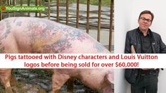 Let Belgian 'artist' Wim Delvoye know that tattooing pigs is not art! What a stupid, sick *uck! YouSignAnimals.org