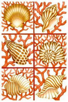Mixture Of Shells