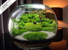 Modern & Unique Moss Terrarium Ideas