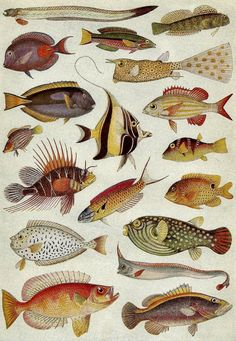 Vintage Illustration - c. 1930s Tropical Fish. Any of these would make an awesome tattoo