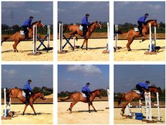 Perfect Jumping Position: Exercise 5 - Bounce to a single stride   Your Horse   Videos & Advice   Riding Advice   Show Jumping