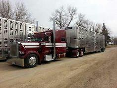 Peterbilt 379 | Cattle Haulers