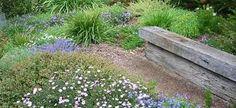 Australian Native garden designs - All About Australian Garden Design, Australian Native Garden, Australian Plants, Modern Garden Design, Landscape Design, Back Gardens, Small Gardens, Outdoor Gardens, Bush Garden