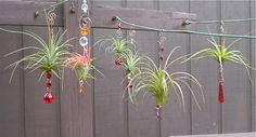 Air Plant Hanging Window Ornaments- Assorted 3 pack Easter Gift Mothers Day Spring Birthday Gift For Mom Gifts under 50