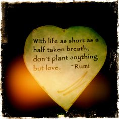 """With life as short as a half taken breath, don't plant anything but love."" - Rumi"