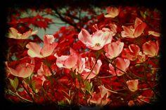 Magnolia spring postcards