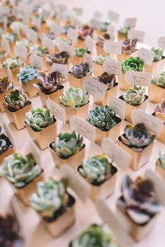 """Arrange a vast selection of tiny succulents for guests to choose from for a rustic wedding favor that doubles as an escort """"card"""". favors ideas 15 Rustic Wedding Favors Your Guests Will Love Wedding Favors And Gifts, Succulent Wedding Favors, Rustic Wedding Favors, Wedding Table, Wedding Decorations, Party Favours, Wedding Centerpieces, Nautical Wedding, Wedding Favours Useful"""