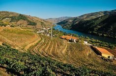 Mesão Frio in the Douro Valley