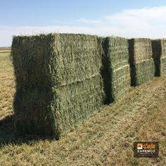 #AlfalfaHay #Hay #eTradePakistan #WholesaleAlfalfahay Alfalfa Hay, E Trade, Animals, Iron, Animales, Animaux, Animal, Animais