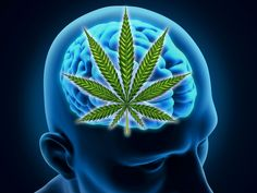 Medical cannabis does not harm your brain, it protects it - #MMJ http://www.midwestcompassion.org/2016/11/21/medical-cannabis-does-not-harm-your-brain-it-protects-it/