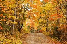 Driveway on October 10, 2015