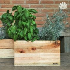 Floreira Horta em casa Plants, Landscaping, Log Projects, Houses, Plant, Planets