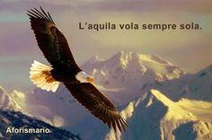Aforismario®: Aquila - Frasi e proverbi sui Rapaci