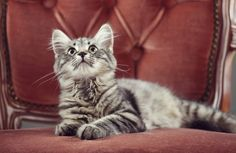 14 Things That Cat Owners Know to Be True The cat's never in your spot. You're in the cat's spot.