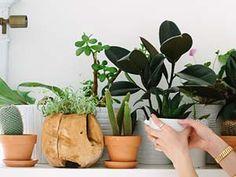 Decoração: Plantinhas no apartamento