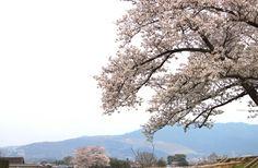wakakusayama View in The World Heritage