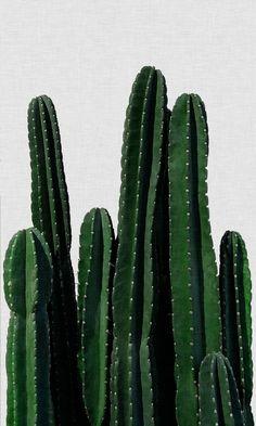 Cactus | Poster | artboxONE