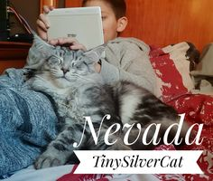 Maine Coon, Nevada, Animals, Cat Breeds, Animales, Animaux, Animal, Animais