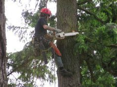 Looking for the best tree removal Los Angeles has to offer? Los Angeles Tree Removal can get the job done fast with friendly, safe, professional tree services. http://treeremovallosangeles.org