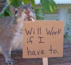 cute-squirrel5.jpg (500×460)