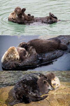 Fin décembre, l'aquarium de Monterey, en Californie, a accueilli la naissance d'un bébé loutre. L'adorable animal a été une jolie surprise de fin d'année, car les équipes du parc ne savaient pas que la loutre attendait un petit.