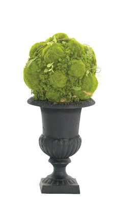 """Search Results for """"ndi moss ball in cast iron urn black – domino Urn Planters, Flower Planters, String Garden, Front Porches, Topiary, Backyard Landscaping, Garden Furniture, Container Gardening, Planting"""