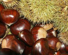 Paleo Nuts and Seeds Recipes Bonsai Seeds, Tree Seeds, Qingdao, Nuts And Seeds Recipes, Paleo Nuts, Paleo Life, Paleo Food, Las Vegas Food, Herbs