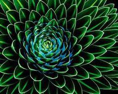 grüne fototapete - Google-Suche