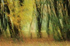 Nieuw in mijn Werk aan de Muur shop: Bewegend Bos
