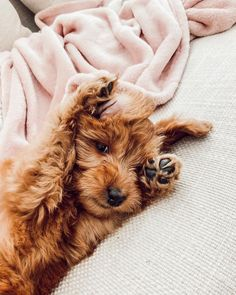 Newest member of the family! Say hello to Luma! 💕🌟🐶 animals silly animals animal mashups animal printables majestic animals animals and pets funny hilarious animal Little Puppies, Cute Dogs And Puppies, I Love Dogs, Doggies, Cute Puppy Pics, Puppies Tips, Adorable Puppies, Dachshund Puppies, Small Puppies