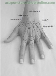 ( Lumbar Pair Point YAOTONGDIAN - Acupuncture Points ) Two points on the dorsal aspect of the hand, between the and metacarpal bones, on the level of the junctions of the haft and the base of the respective metacarpal bones. Acupuncture For Weight Loss, Acupuncture Points, Acupressure Points, Cupping Therapy, Massage Therapy, Craniosacral Therapy, Shiatsu, Acupuncture Benefits, Les Chakras
