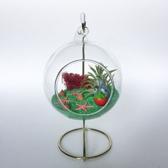 Items similar to The Totoro Series: Strawberry Fields Forever Terrarium Kit on Etsy Air Plant Terrarium, Terrarium Kits, Hanging Air Plants, Strawberry Fields Forever, Green Craft, Glass Vessel, Weathered Wood, Totoro, Wood Paneling