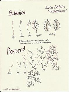 Botanica and Boxwood by urbanspinner, via Flickr